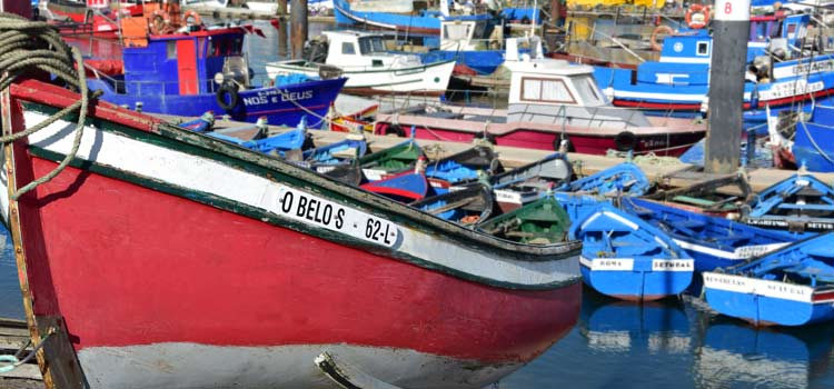 fishing fleet  Setubal